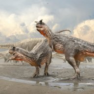 The Speeding Carnotaurus