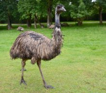 Emu1980
