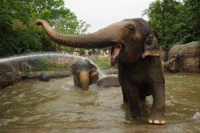 ElephasPrime