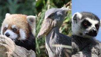 Zoos Travelers
