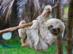 da sloth