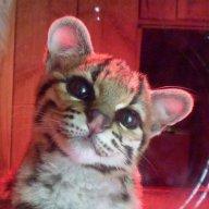 Panthera9