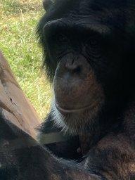 Mr monkey Moses