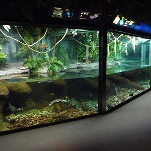 Columbus Zoo And Aquarium Photo Galleries Zoochat