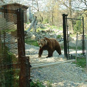 Giardino Zoologico Di Pistoia Zoochat