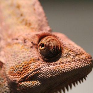 Australian Reptile Park - ZooChat
