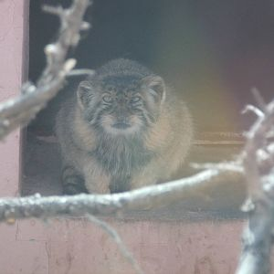 Qinghai-Tibet Plateau Wildlife Zoo | ZooChat