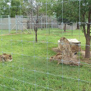 Tanganyika Wildlife Park - Page 4 - ZooChat