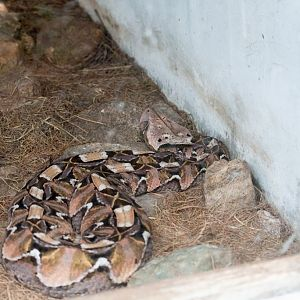 M B T 's Snake Farm and Reptile Centre - ZooChat