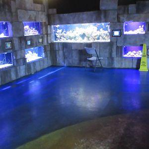 Austin Aquarium Photo Galleries Zoochat
