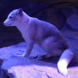 Tucan klub skandinavisk dyrepark eller ree park