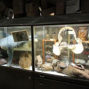 Curiosity Cabinet Display