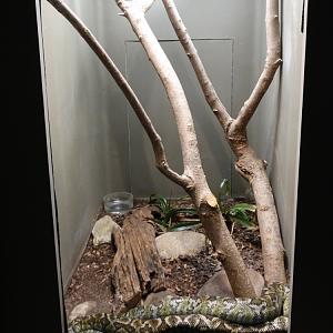 1dffb058b4 Feb. 2018 - HerpAquarium - Madagascar Tree Boa Exhibit