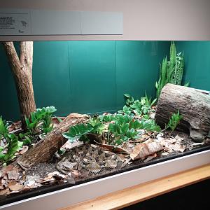 465efbc9d0 Feb. 2018 - HerpAquarium - Gaboon Viper Exhibit