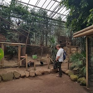 Aviaries in Tropical Hall