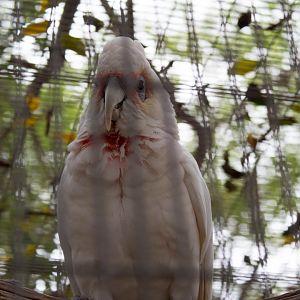 Emerald Forest Bird Gardens - ZooChat