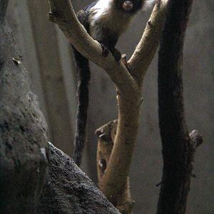 Babyboom i tallinns djurpark