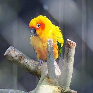 Zoo Photo Galleries | ZooChat