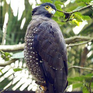 Bali Bird Park Rimba Reptile Park Zoochat