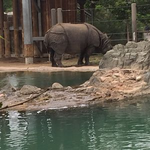 Denver Zoo - Page 2 - ZooChat