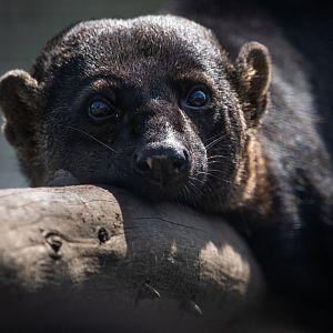 Hamerton Zoo Park - ZooChat