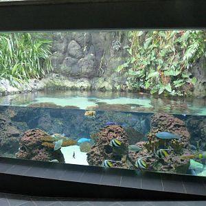berlin zoo aquarium photo galleries zoochat. Black Bedroom Furniture Sets. Home Design Ideas