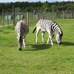 Black Isle Wildlife Park - ZooChat