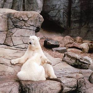 x wideos Aalborg Zoo