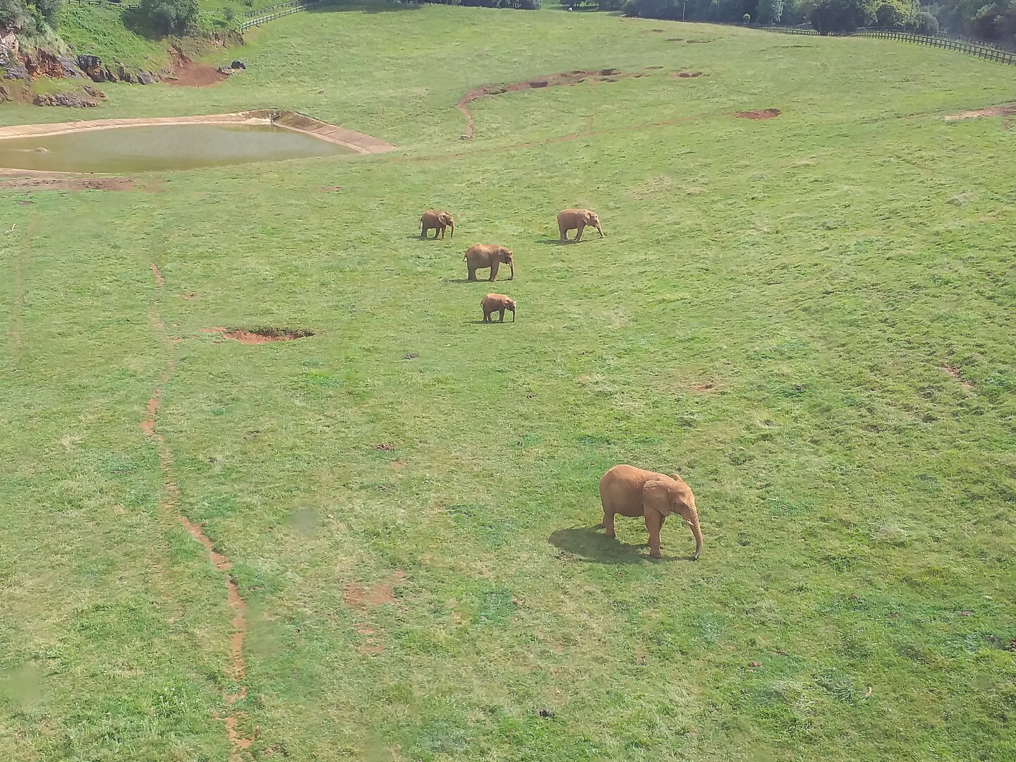 https://www.zoochat.com/community/media/african-elephants-from-the-cable-car-cabarceno-2019.455760/full?d=1566287149