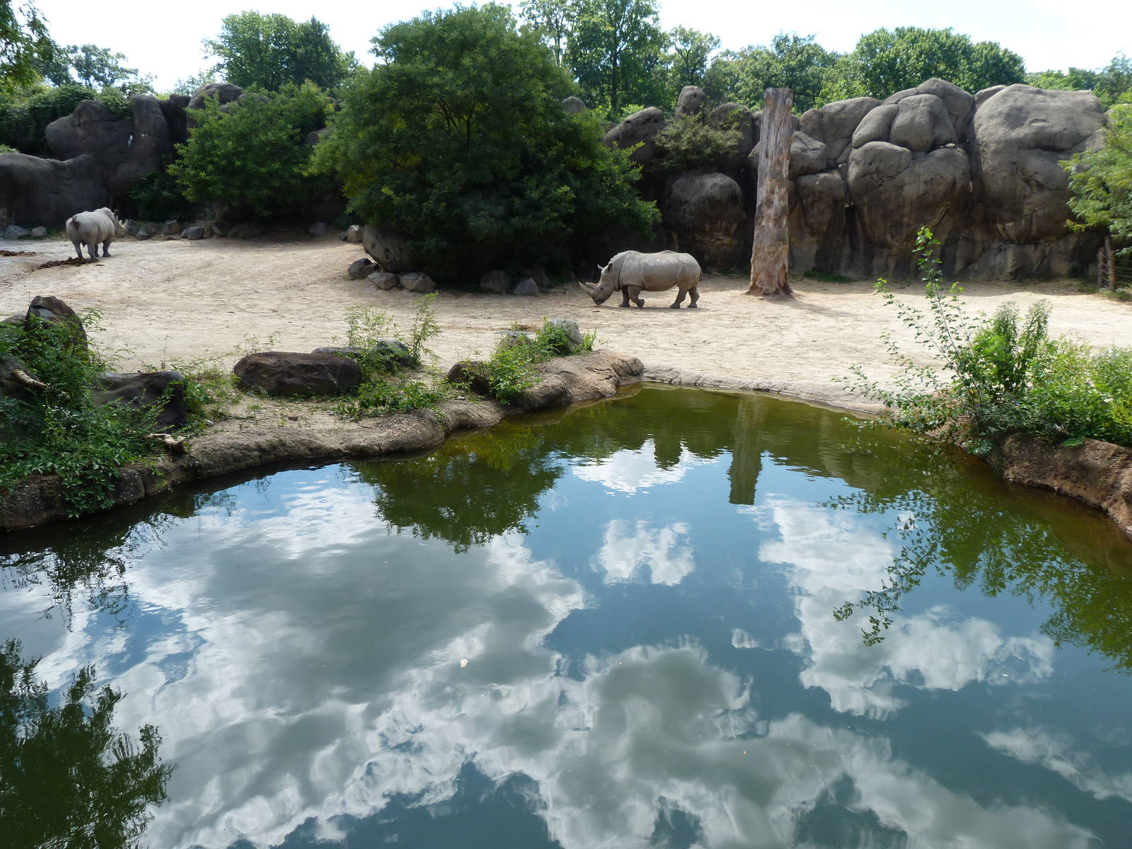 African Oasis Zoochat