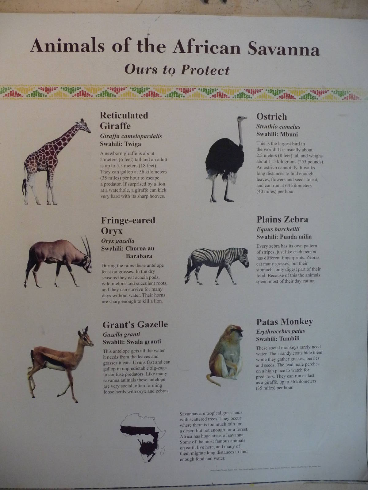african savanna - animal list | zoochat