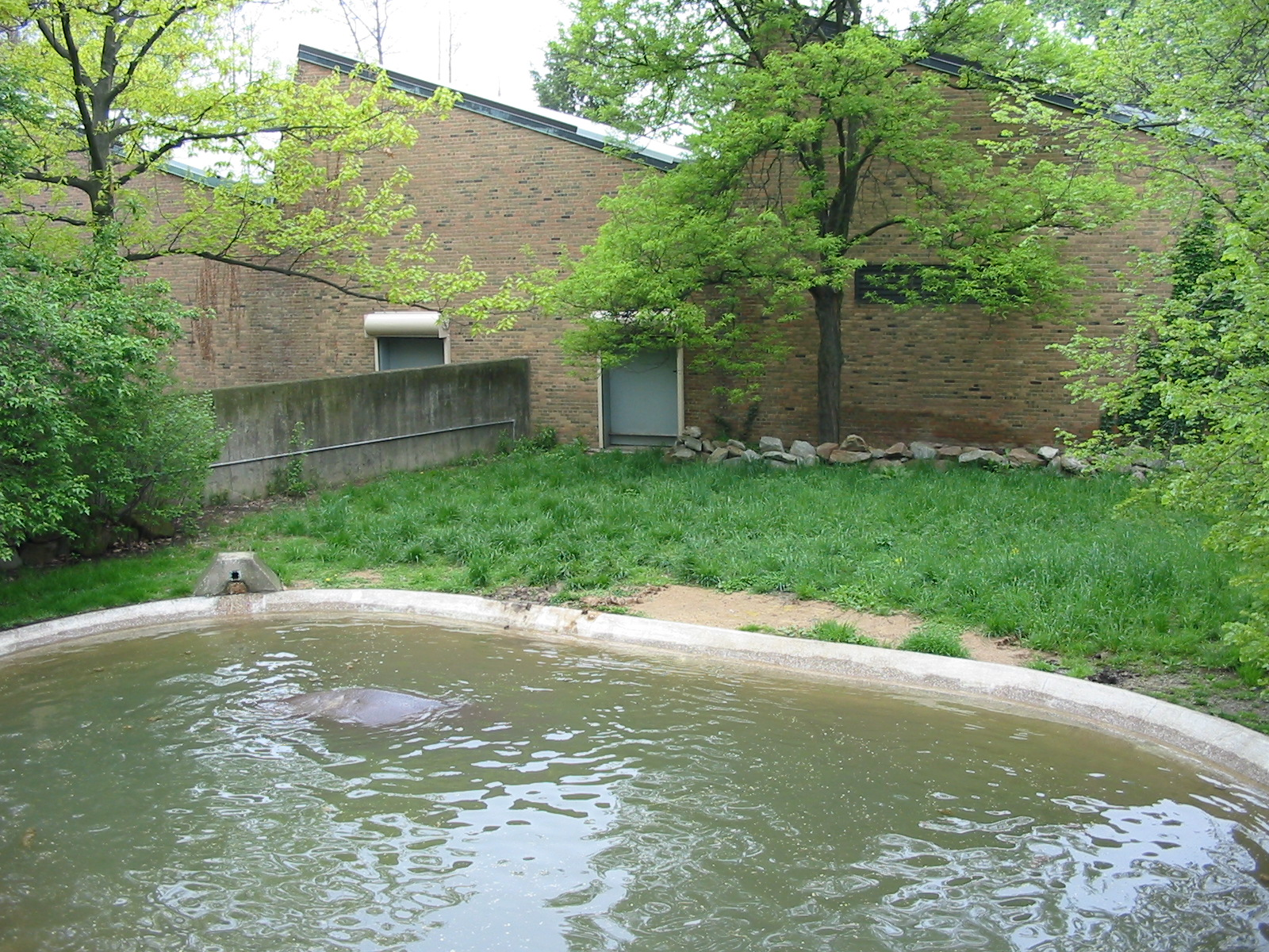 Cleveland zoo 2003 hippopotamus exhibit at the old for Classic house 2003