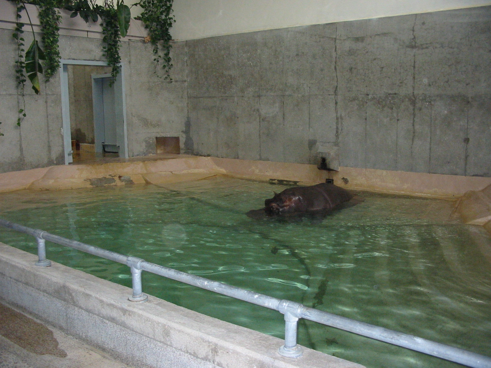 Cleveland zoo 2003 hippopotamus inside the old pachyderm for Classic house 2003