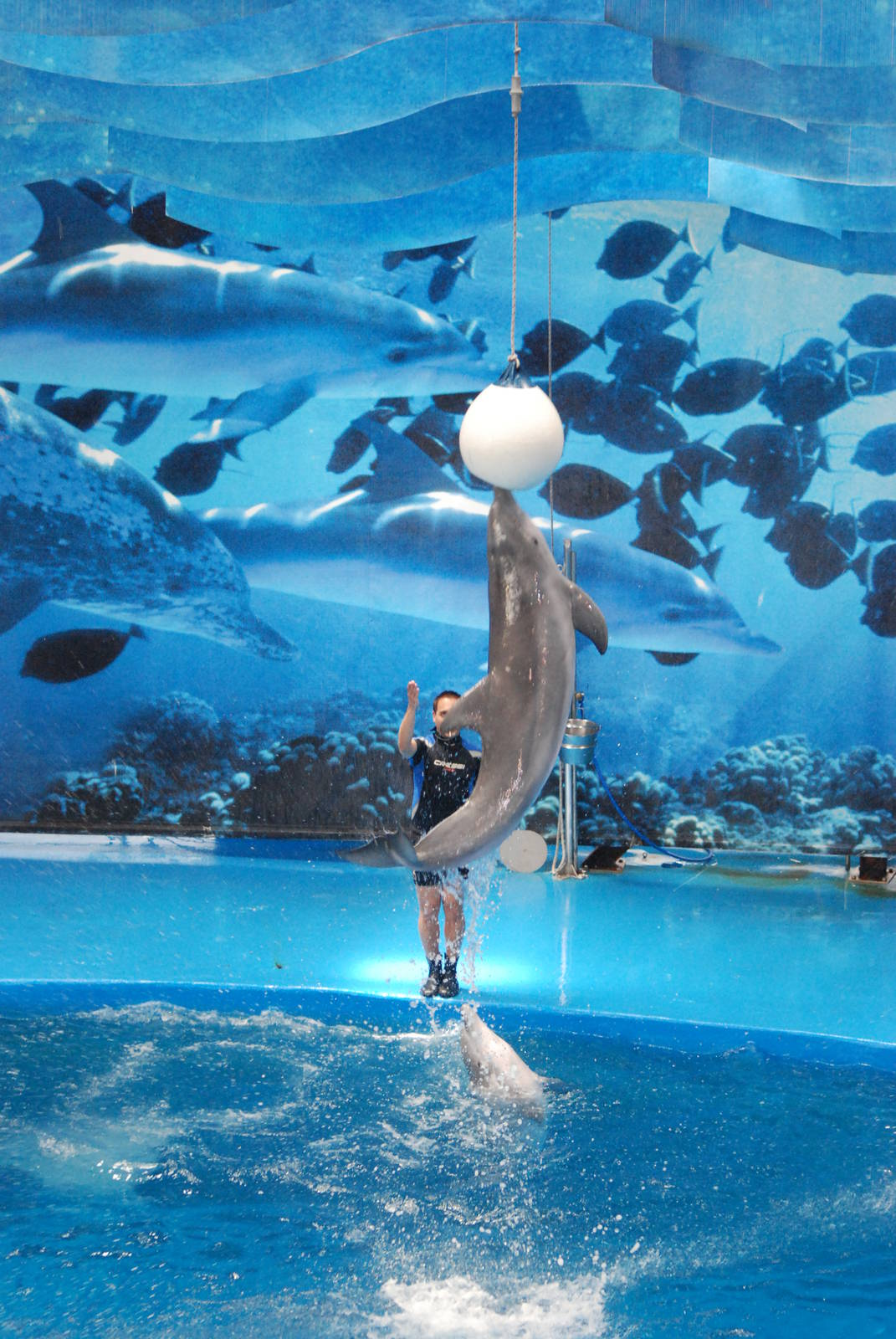 Dolphin Show At Barcelona 30 05 11 Zoochat