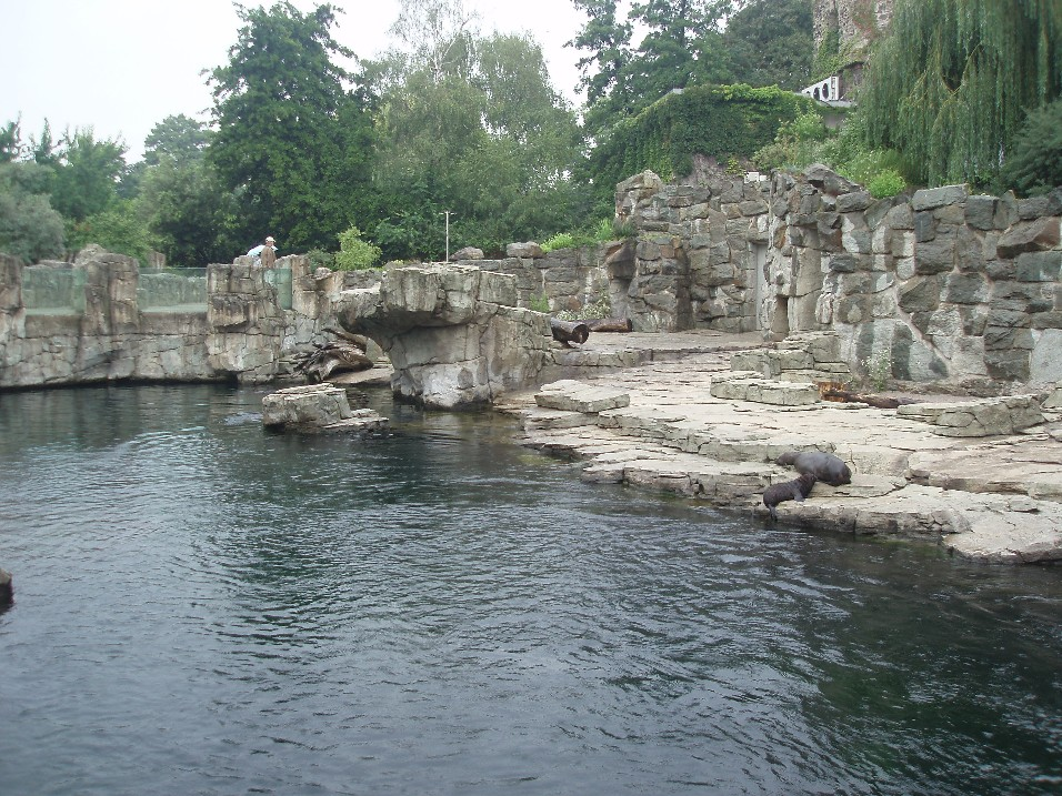 Frankfurt Zoo Seal Cliffs Zoochat