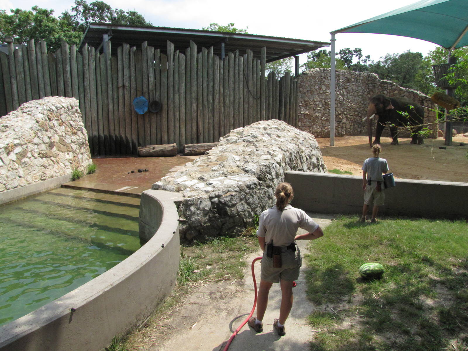 houston zoo 2010 bath time in the asiatic elephant complex zoochat. Black Bedroom Furniture Sets. Home Design Ideas