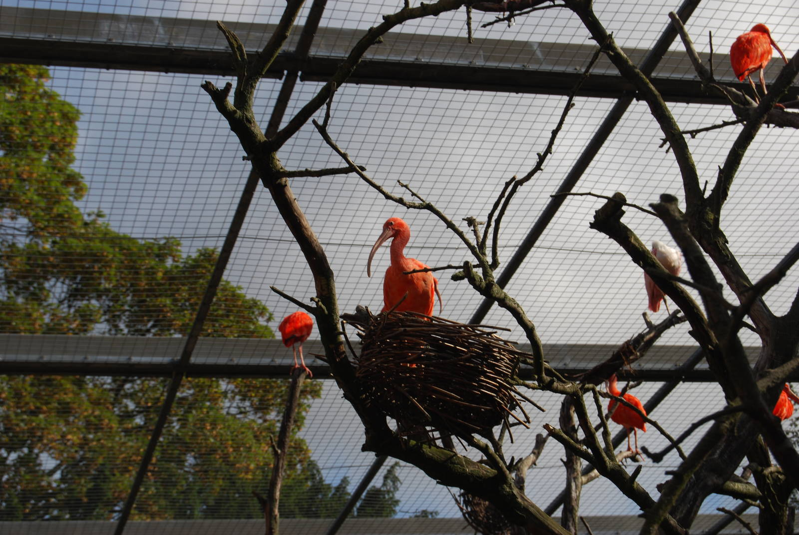 speed dating aviary Because pope fabian had not only raised doves but also had been selected for the papacy by a dove, he established a large aviary, that also served as his personal living quarters, in the papal residence.