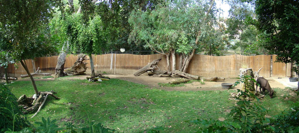 Lowland Anoa exhibit at the Los Angeles Zoo | ZooChat