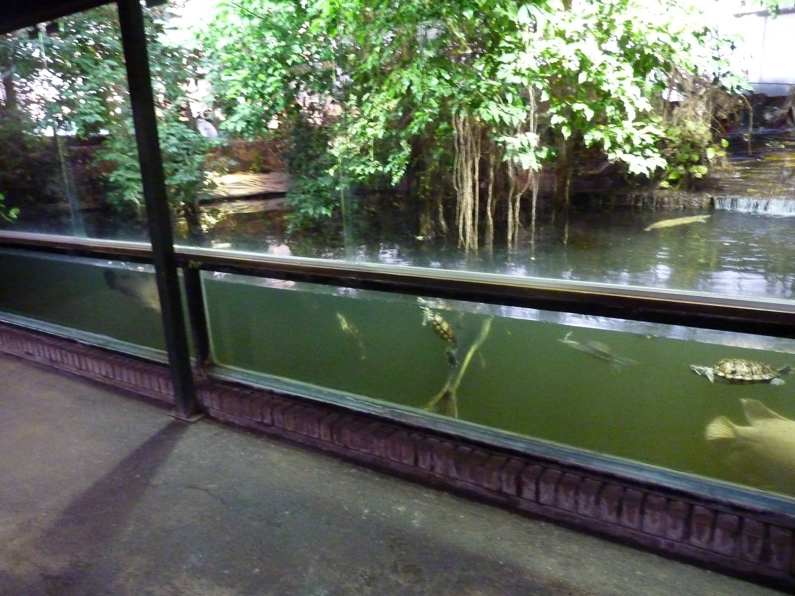 Main fish pond zoochat for Tropical fish pond