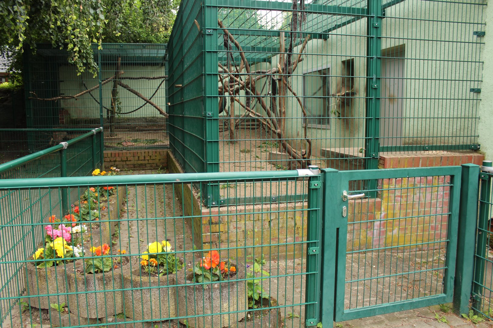 Moor Macaque Cage Tierpark Limbach Oberfrohna Zoochat