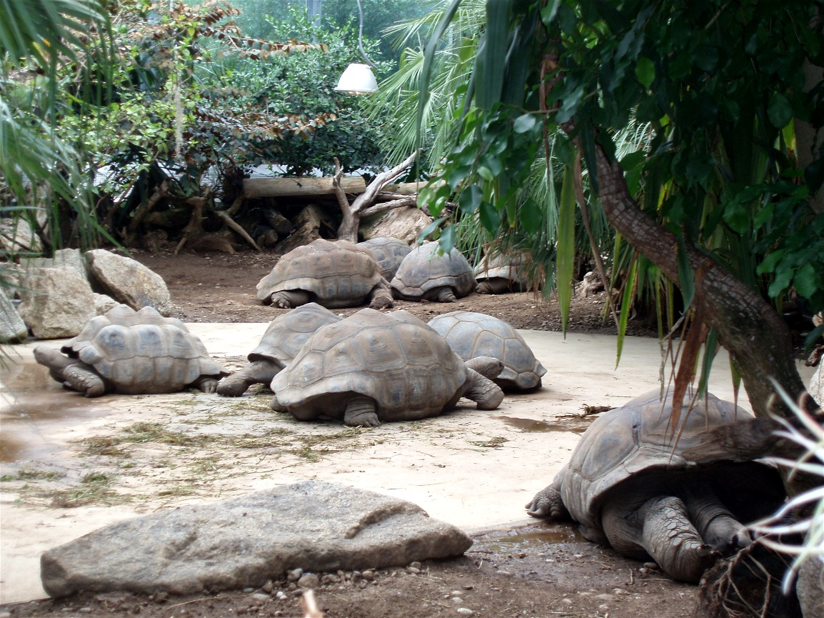 munich zoo giant tortoises zoochat. Black Bedroom Furniture Sets. Home Design Ideas