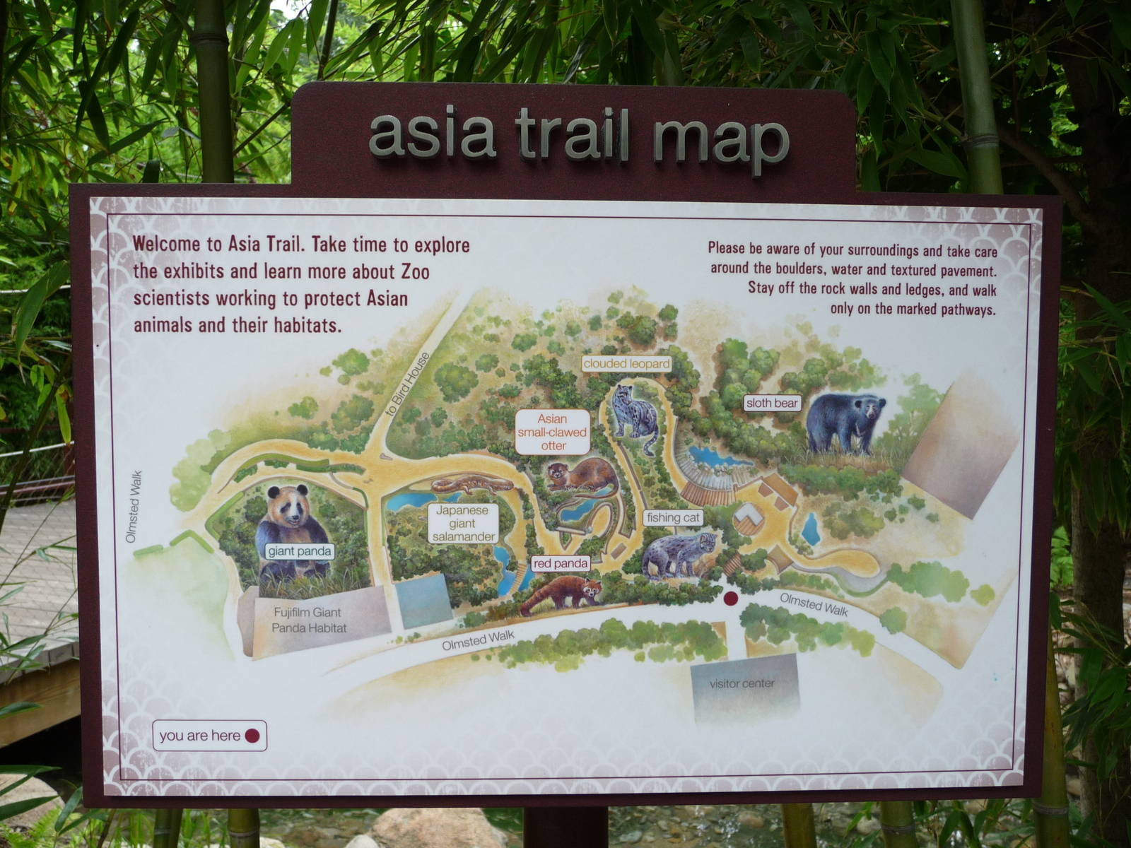National Zoo Asia Trail Map Zoochat