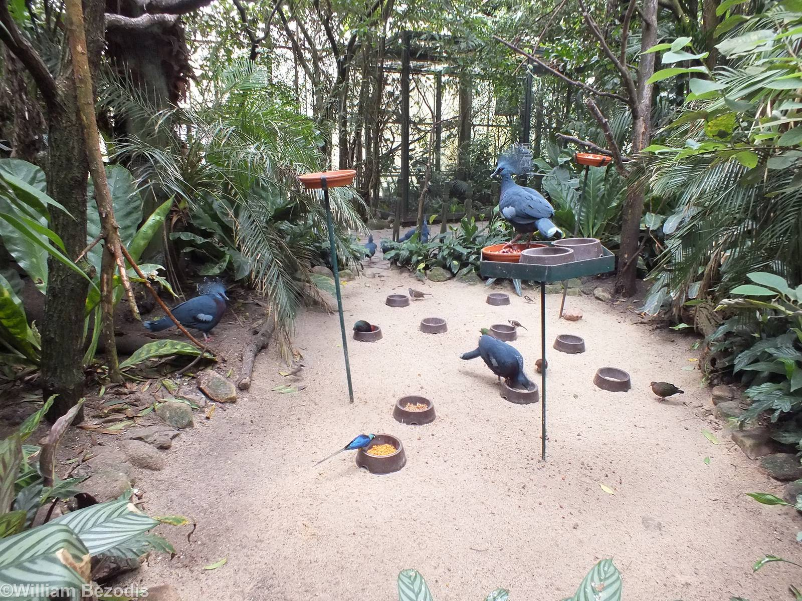 one of the bird feeding areas in the rainforest hall zoochat