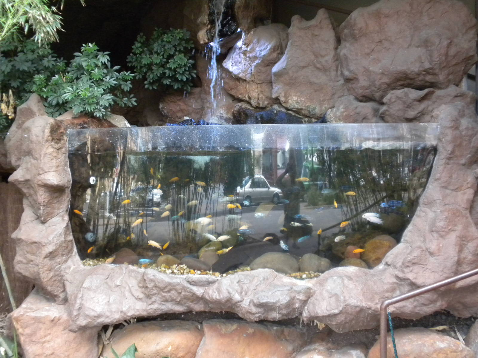 Outdoor african cichlids zoochat for How to build an outdoor aquarium