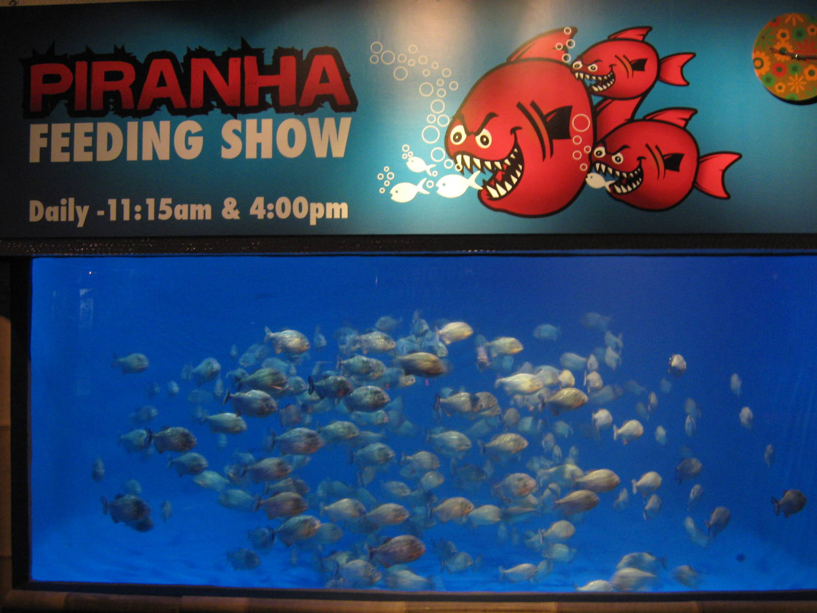 Image result for piranha tank