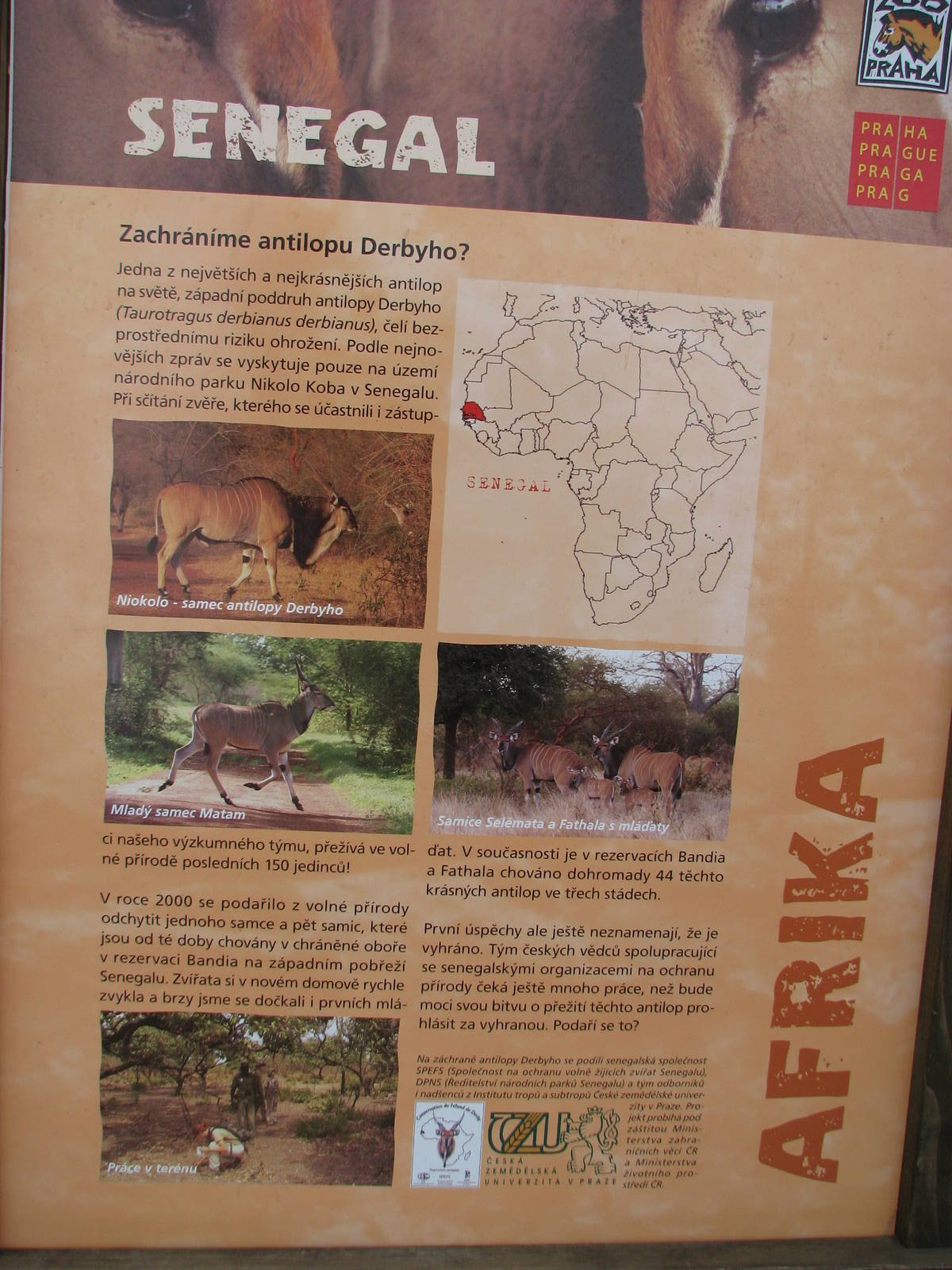 Poster About Derby Eland At Prague Zoo Zoochat