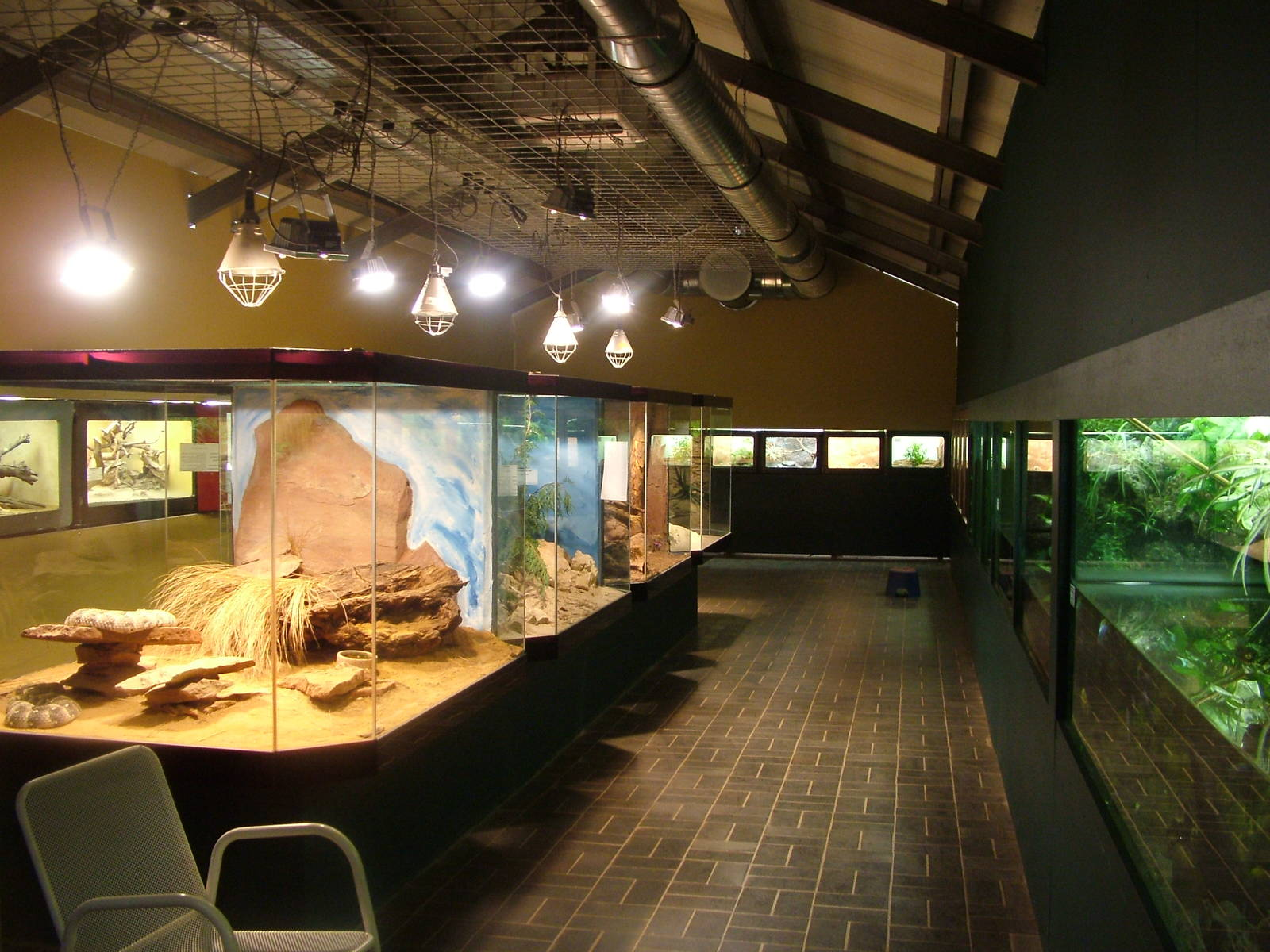 Reptile Room At Darmstadt 30 08 10 Zoochat