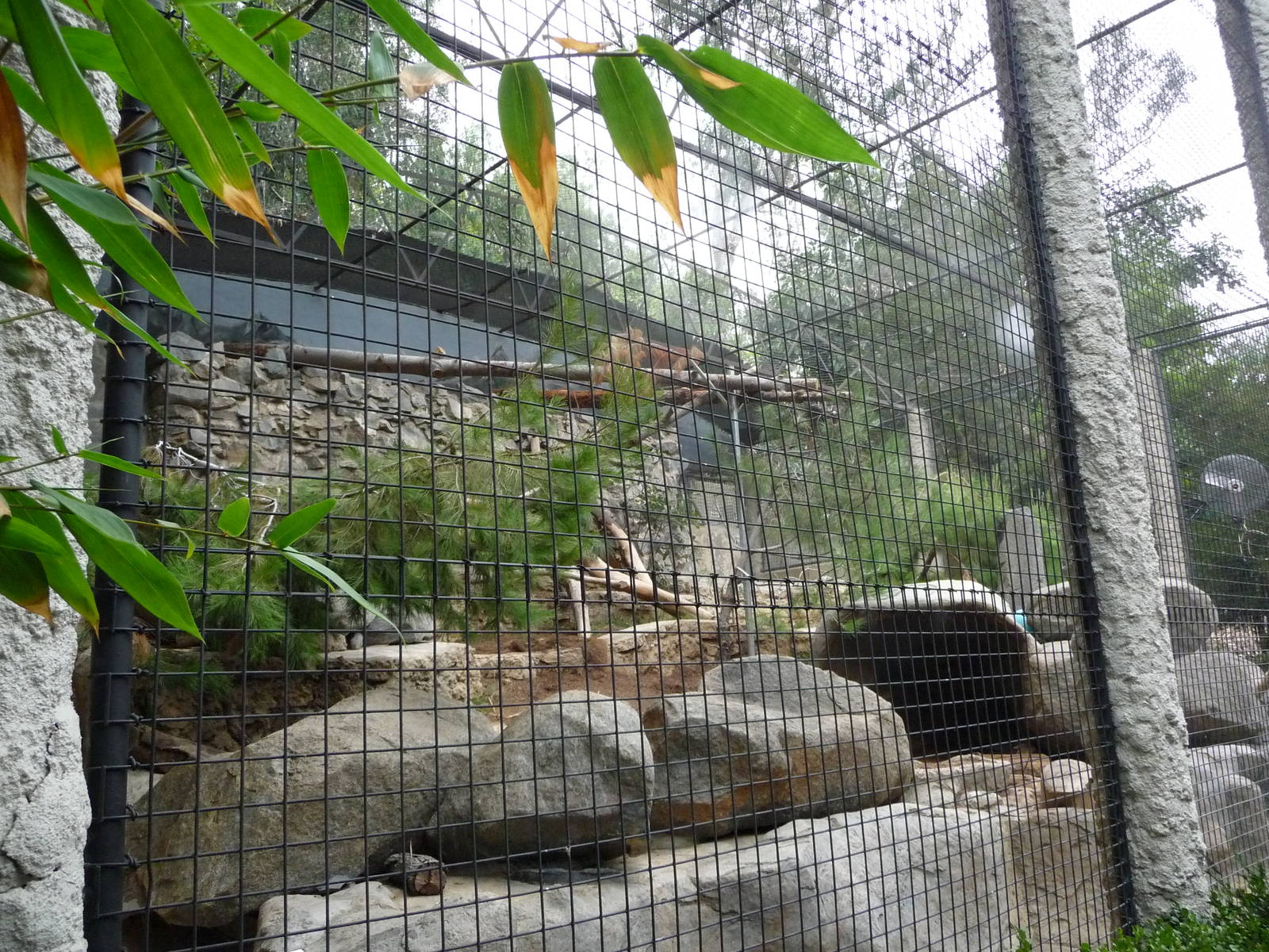 Zoochat Bronx Zoo | Pics | Download |