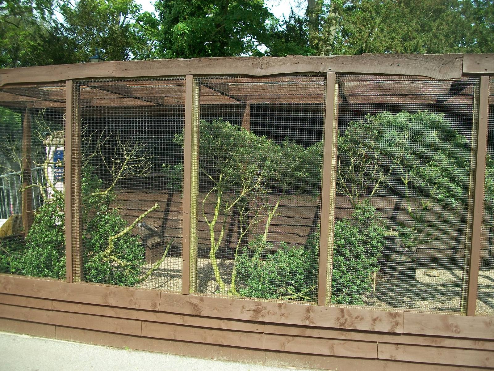 Shrubbery Pruned In The Aviary For Finches 23rd May 2014