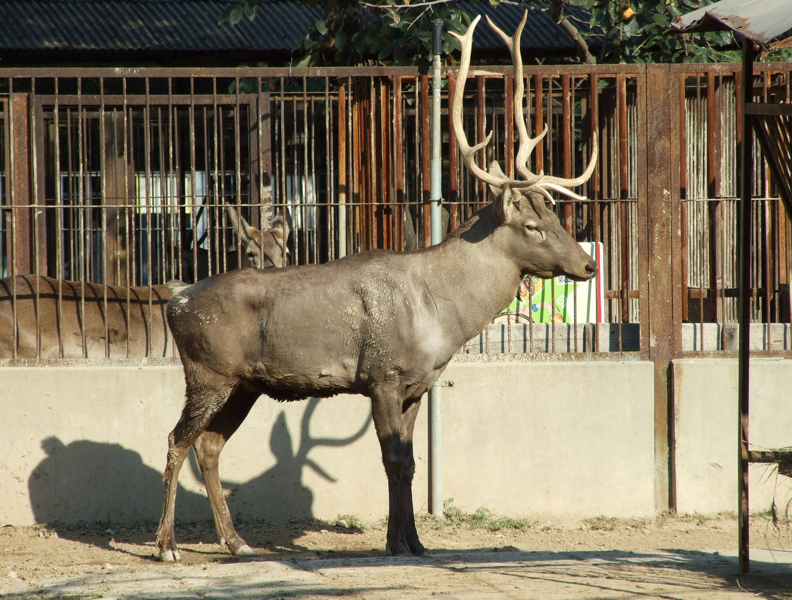 Wild animals and plants in East Tibetan plateau:China Wildlife Tour